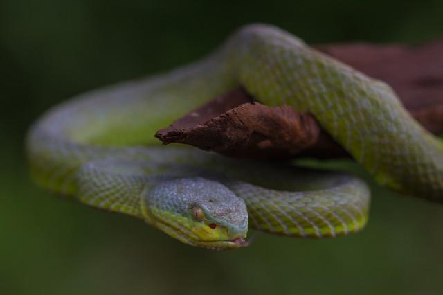 出门游玩时,被蛇咬伤急救需要注意哪些方面图3