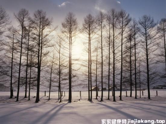 """冬季养生 小雪节气多吃""""三黑"""""""