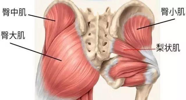 经络知识:臀大肌和臀中肌步态