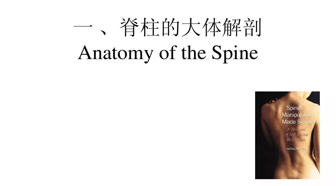 运动康复中的整脊手法图3