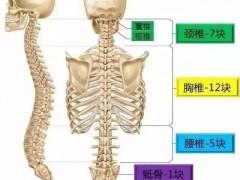 专业骨科脊柱精讲基础知识及诊断分析