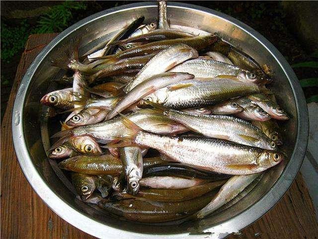 经常吃鱼肉健脑、护心脏效果好,可营养师提醒:有4种鱼别随便吃