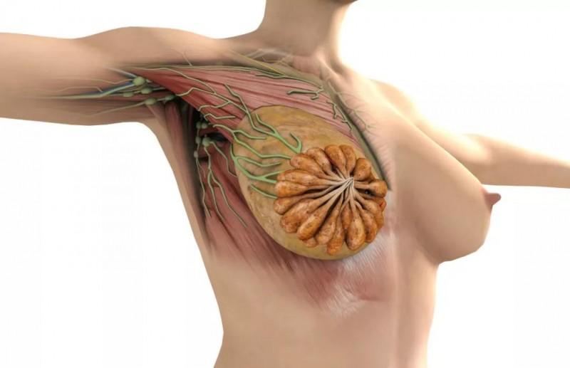 愿天下女人无病-乳腺癌是被气出来的?你还敢生气吗?