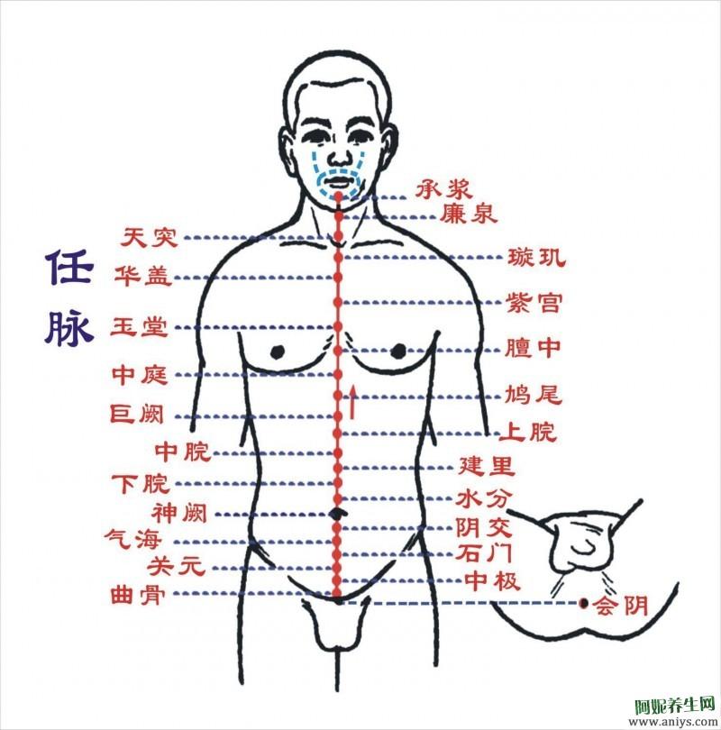奇经八脉的循行 生理功能 八个代表性穴位图1