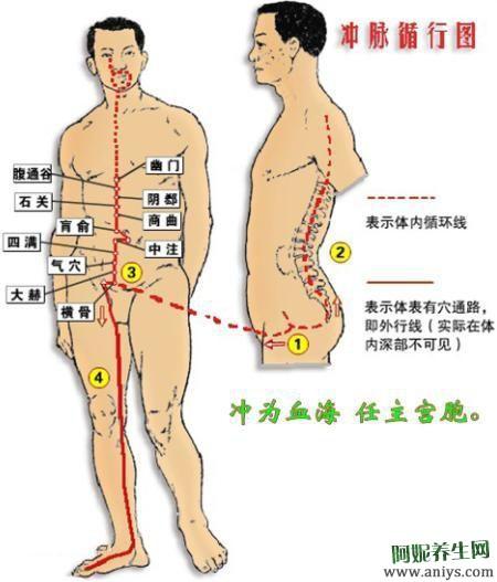 奇经八脉的循行 生理功能 八个代表性穴位图3