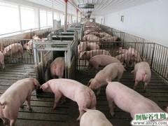 多个速冻品牌疑被查出非洲猪瘟病毒 专家:不传染人