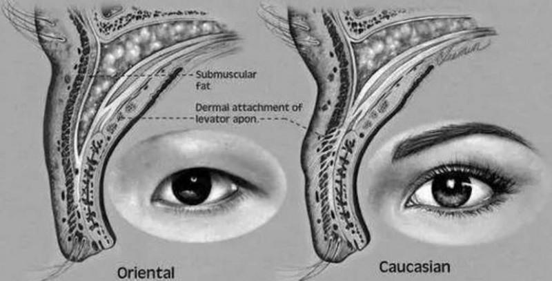熬夜眼皮下垂怎么恢复正常?眼皮下榻怎么办?