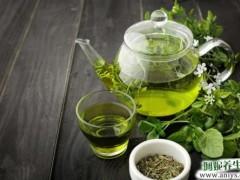 夏秋季适宜喝绿茶 降火消暑还美容养颜减肥