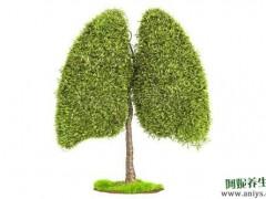 夏天养好肺 秋冬少受罪图1