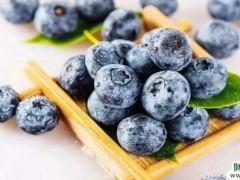 吃蓝莓,有助于降血压和软化血管图1