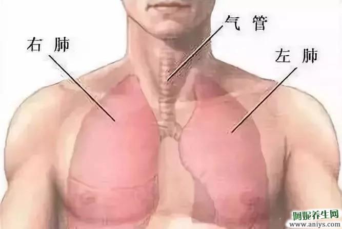 拍胸 摩胸 擦胸 拍这个部位 绝好的健康养生法图2