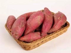 红薯味美 食养有道