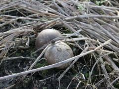 竹荪蛋的作用