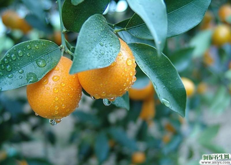 冬天吃这些水果美容又养生 还不快吃起来图2