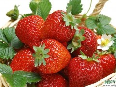冬天吃这些水果美容又养生 还不快吃起来图1